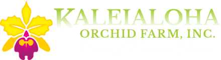 Kaleialoha Orchid Farm Inc. Home of Hawaii Blooms